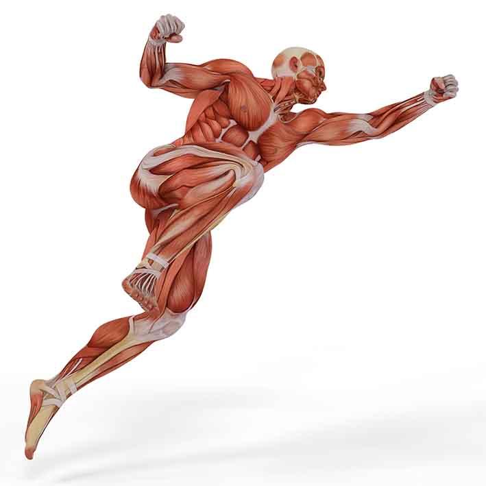 bigmuscles (2)